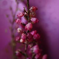 .Purple. by h23b