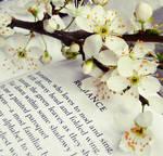 SpringRomance