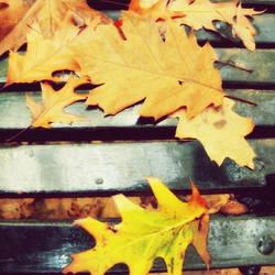 autumn again by h23b