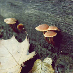 mushroom by h23b