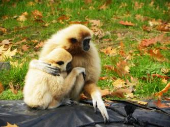 Monkey Love 1. by h23b