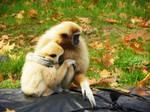 Monkey Love 1.