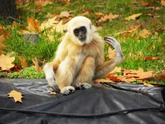 Monkey by h23b