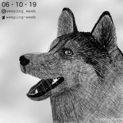 Inktober Day 6 : Husky