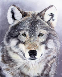Wolf oil painting (80x100cm)
