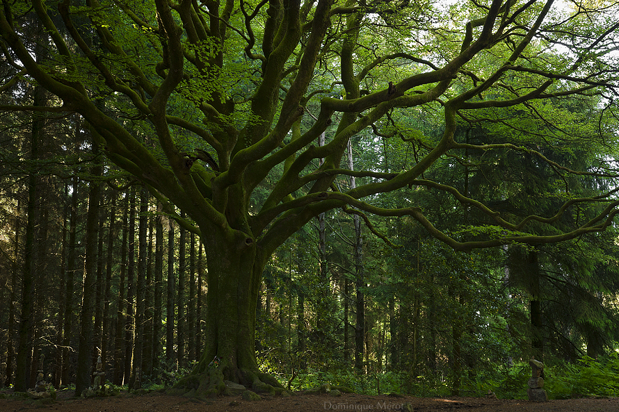 Harmonious tree by dominique-merot