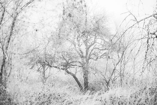 Cold serinity