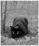 Crouching loki hidden cat
