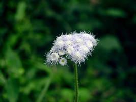 The Purple Flower by siddhartharun