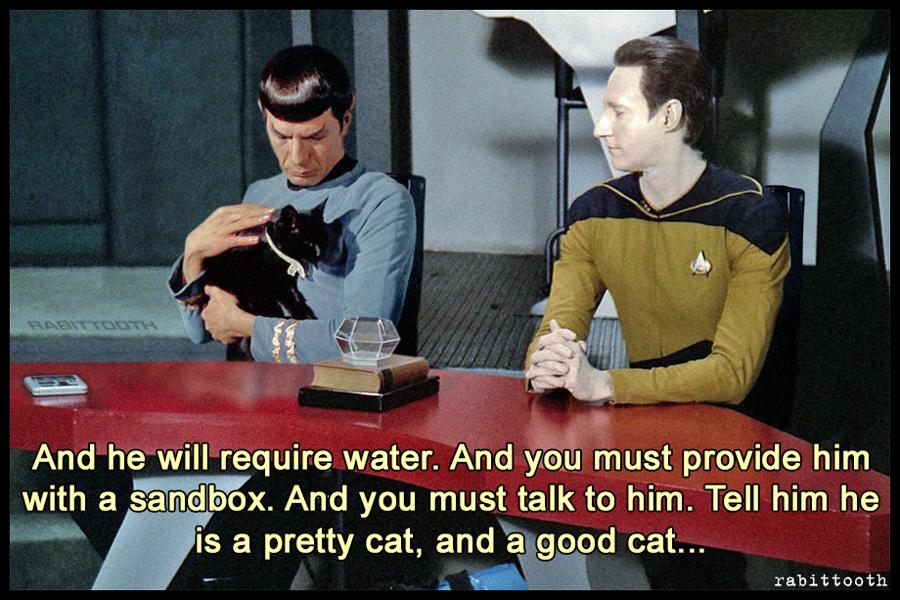Pretty Cat (Meme)