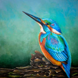 Kingfisher by jeroenvv