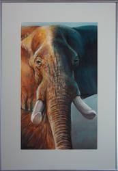 Elephant II by jeroenvv