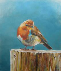 Robin by jeroenvv