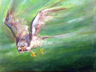Penegrine Falcon by jeroenvv