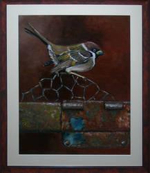 Finch by jeroenvv