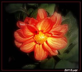 Soft Blaze by FlowerLisa