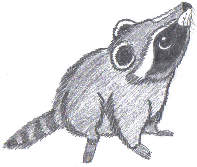 Cute Raccoon by FierySurferChick on DeviantArt Raccoon Drawing Easy