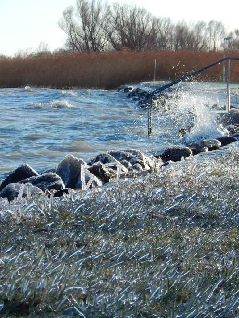 Frozen Gras at the Lakeside, Balaton by WhiteTime