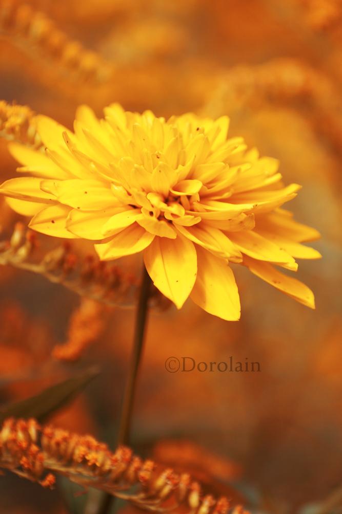 Sunny by dorolain