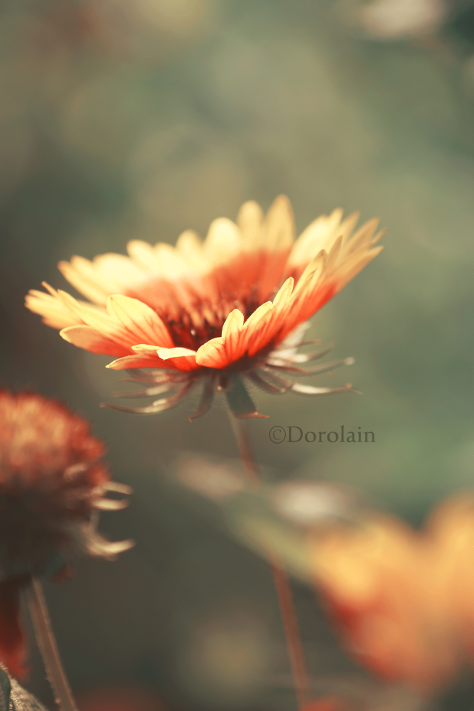 I follow you by dorolain