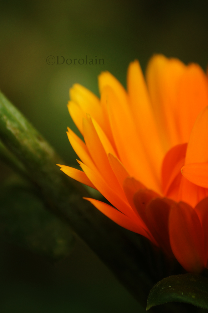 Last summer by dorolain