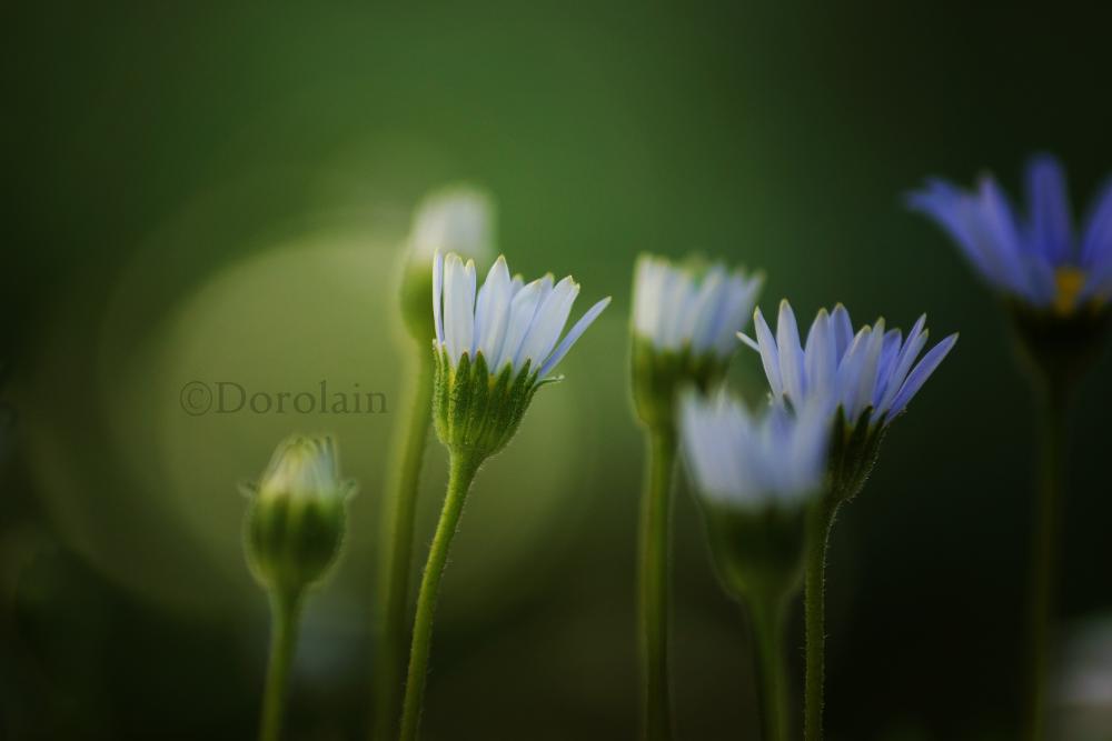 Blue by dorolain