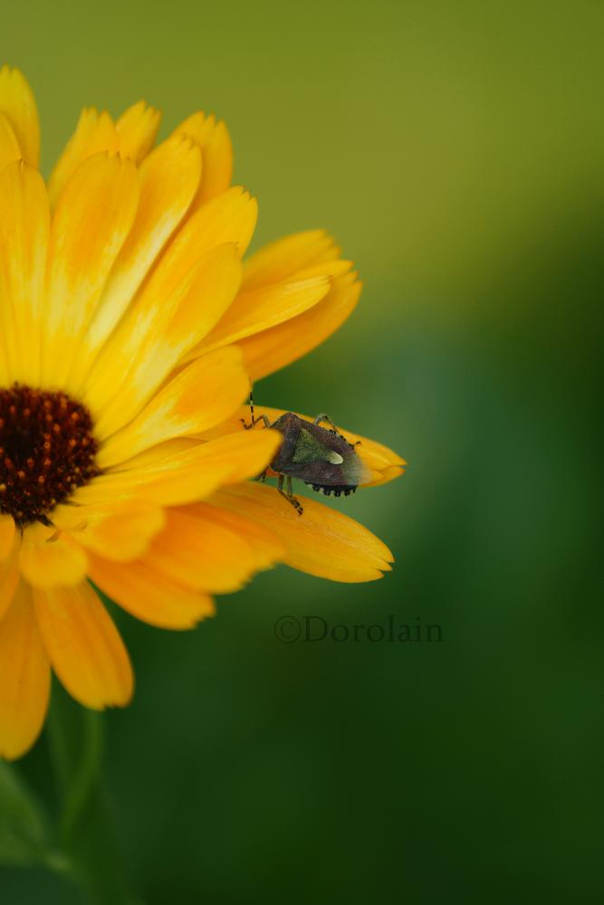 Sunny Day by dorolain
