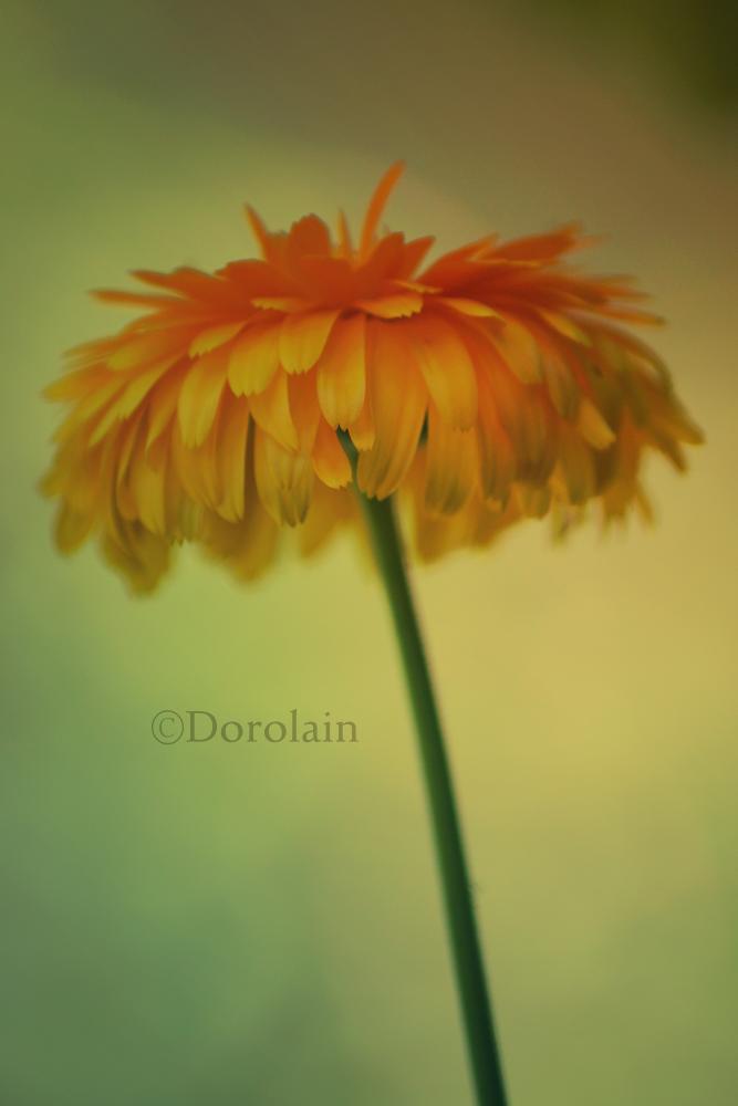Daydream by dorolain