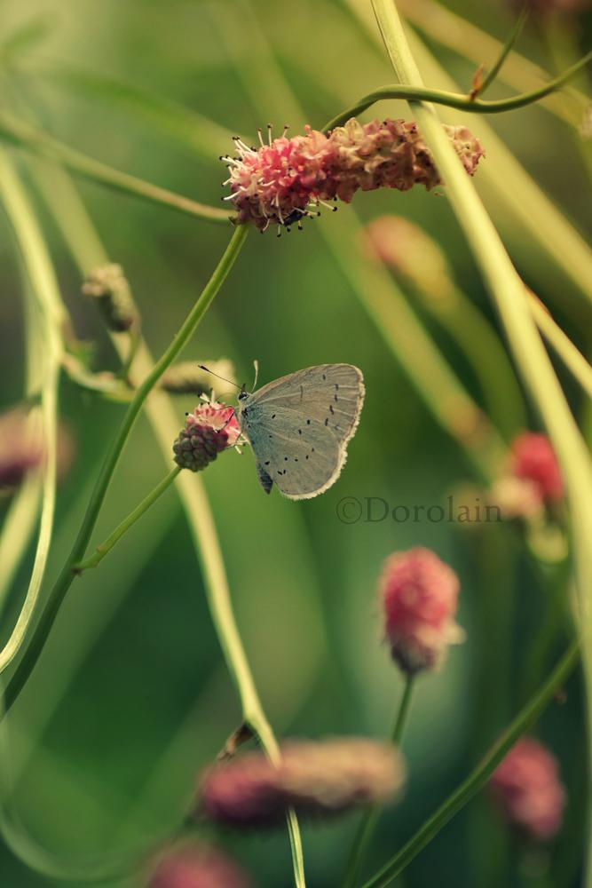 Fly by dorolain