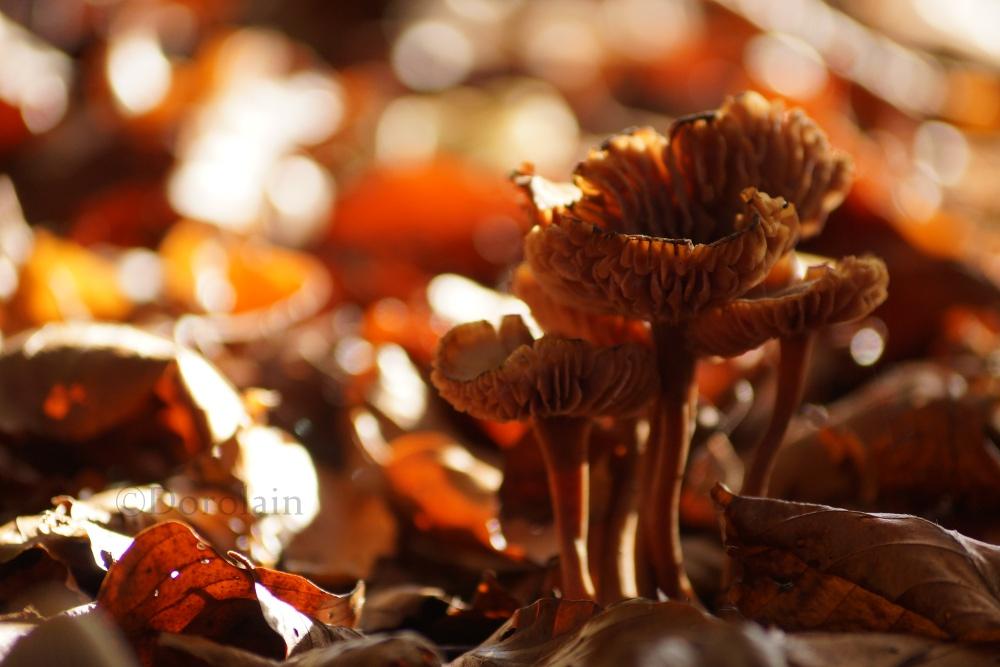 mushroom by dorolain