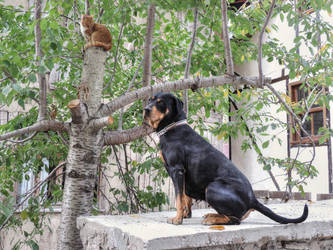 Cat and dog, endless love by ilhamt