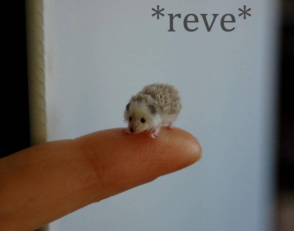 Handmade 1:12 Miniature Sculpture Hedgehog