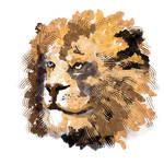 Lion by Ben by WildlifeBen