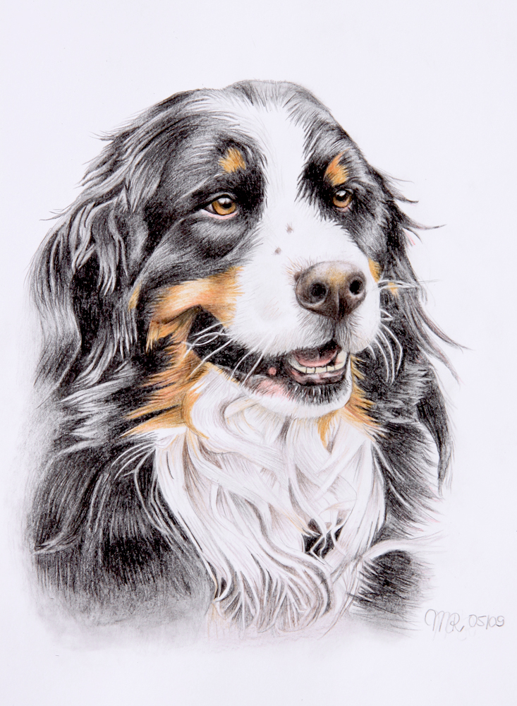 Bernese Mountain Dog Vincent By Melli81 On DeviantArt