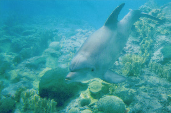 Dolphin by Narzaria