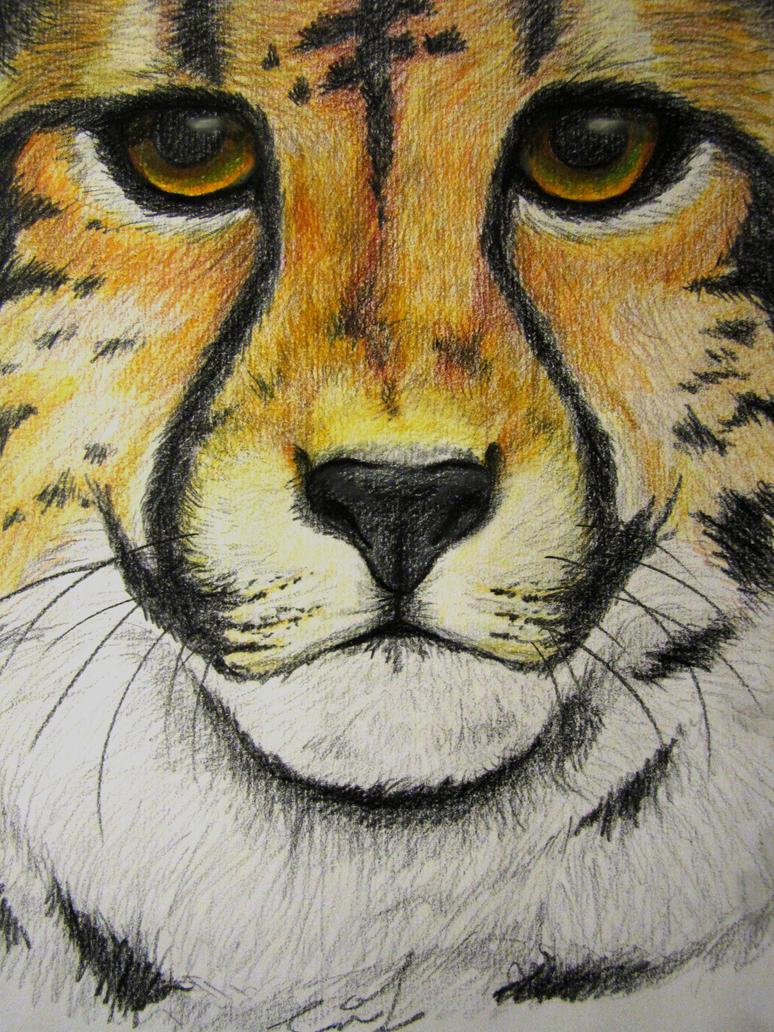 Cheetah by Narzaria