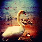 swan by melkore314