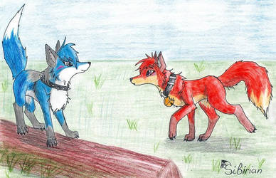 Ruki and Blue by sibirianwolf