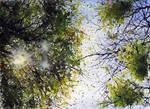 watercolor trees 2