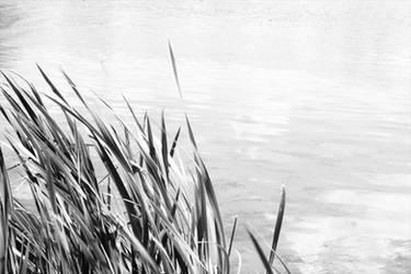Grass at the Lake BW
