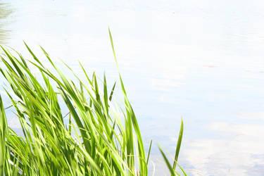 Grass at the Lake