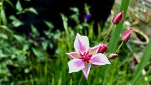 marsh flower