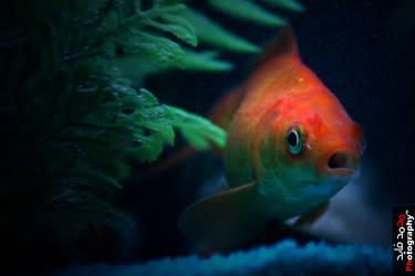 My Fish II by angel852002