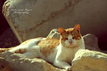 Sleeping Cat by angel852002
