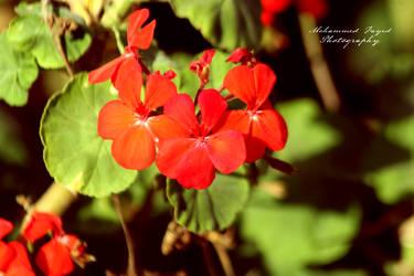 Flower 25 by angel852002
