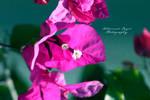 Flower 24 by angel852002