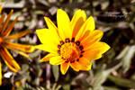 Flower 23 by angel852002