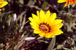 Flower 22 by angel852002