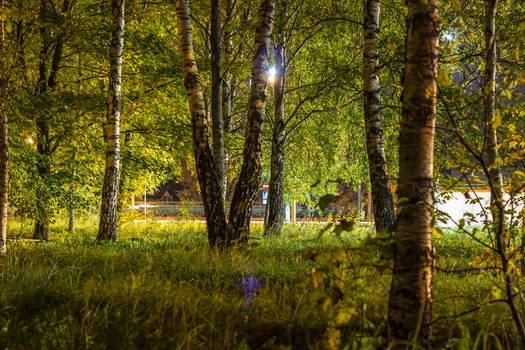 Trees in night