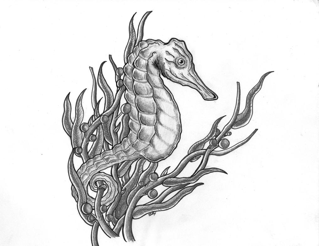 Line Drawing Kelp : Seahorse and seaweed by codizzle on deviantart